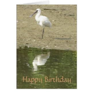 Cartão de aniversário do Spoonbill