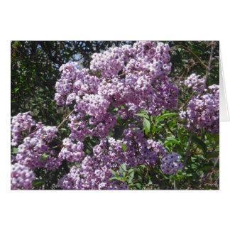 Cartão de aniversário dos Lilacs