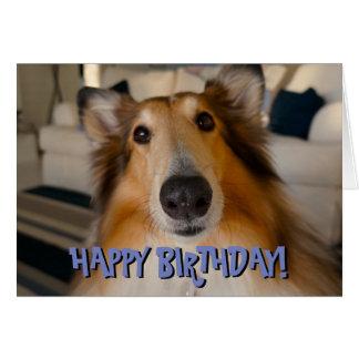 Cartão de aniversário engraçado bonito do collie