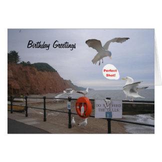 Cartão de aniversário engraçado da gaivota,