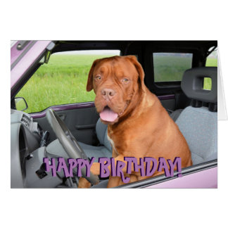 Cartão de aniversário engraçado de dogue de