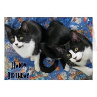 Cartão de aniversário gêmeo dos gatinhos do smokin