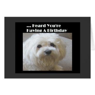 Cartão de aniversário maltês do humor para sobre -