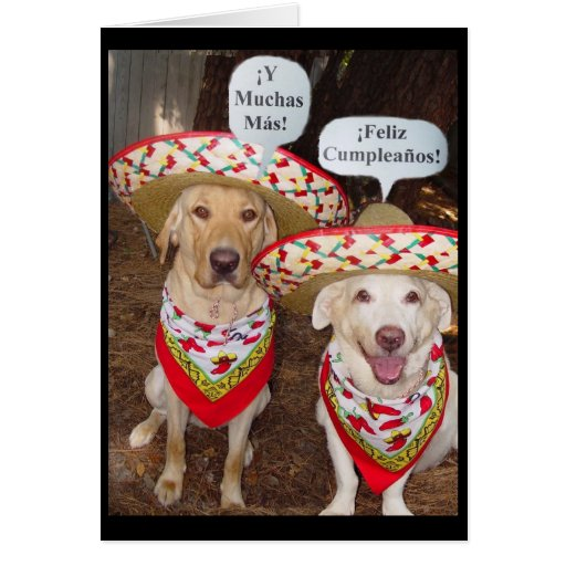 funny mexican pictures in spanish