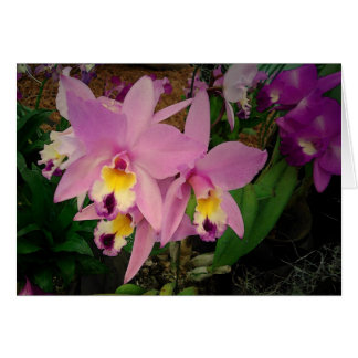 Cartão de aniversário: Orquídeas com um sonho