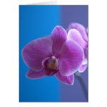 Cartão de aniversário para a filha -- Orquídea