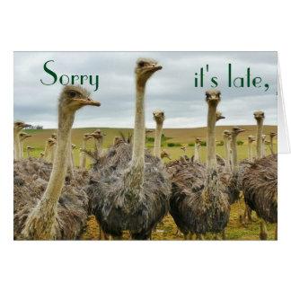Cartão de aniversário tardivo da avestruz