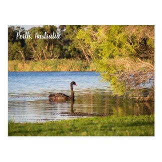 Cartão de Austrália da cisne preta de Perth
