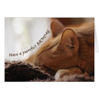 Cartão de Bday do gato