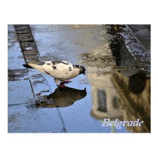 Cartão de Belgrado
