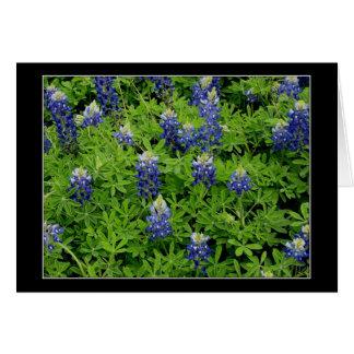 """Cartão De """"Bluebonnets Texas """""""