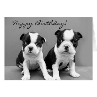 Cartão de Boston Terrier do feliz aniversario