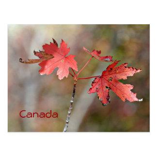 Cartão de Canadá - folhas de bordo Cartoes Postais