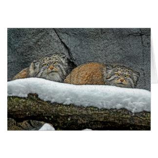 Cartão de cartões de natal da neve dos gatos de