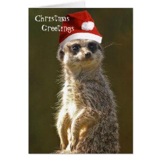 Cartão de cartões de natal de Meerkat