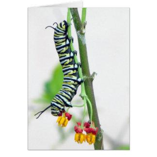 Cartão de Caterpillar do monarca