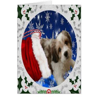 Cartão de Cavachon, Natal