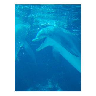 Cartão de conversa dos pares do golfinho