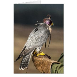 Cartão de cumprimentos da falcoaria