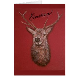 Cartão de cumprimentos do veado do veado vermelho