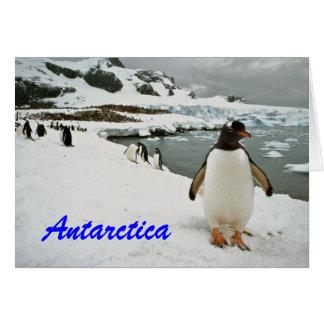 Cartão de cumprimentos dos pinguins da Antártica