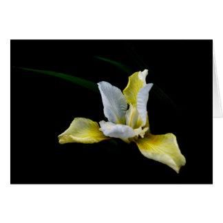 Cartão de cumprimentos floral, vazio para dentro