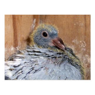 Cartão de direcção do pombo do bebê