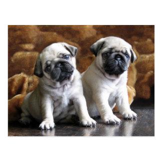 Cartão de dois Pugs