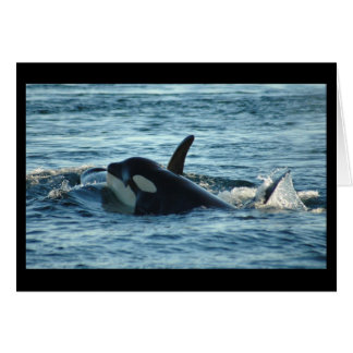Cartão de duas orcas