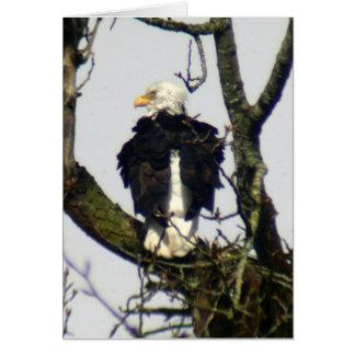 Cartão De Eagle vigilante sempre…