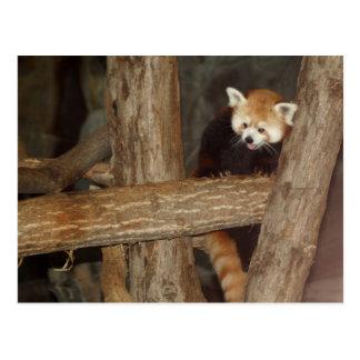 Cartão de escalada da panda