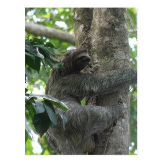 Cartão de escalada da preguiça