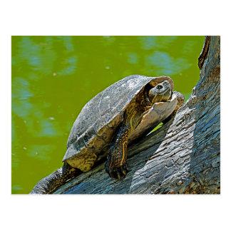 Cartão de escalada da tartaruga