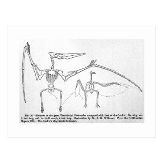 Cartão de esqueleto da arte de Pteranodon