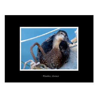 Cartão de férias curioso de Holliday do pato do Cartão Postal