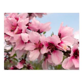 Cartão de florescência cor-de-rosa do ramo