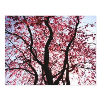 Cartão de florescência cor-de-rosa do salgueiro