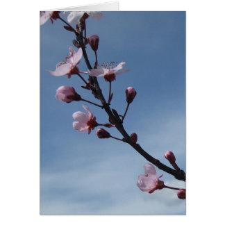 Cartão de florescência da árvore da flor de