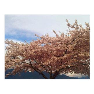 Cartão de florescência da árvore de cereja