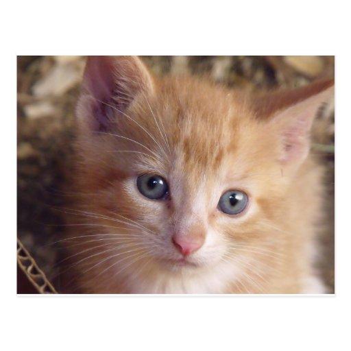 Cartão de Garfield do bebê Cartoes Postais