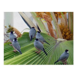 Cartão de Havaí dos pardais de Java