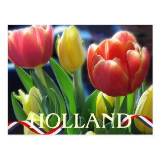 Cartão de Holland das tulipas do primavera do
