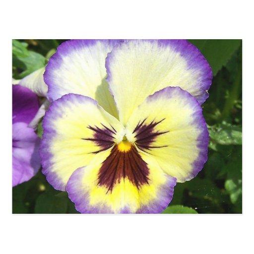 Cartão de imagens da flor do amor perfeito cartão postal