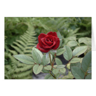 Cartão de inquietação da rosa vermelha da relação