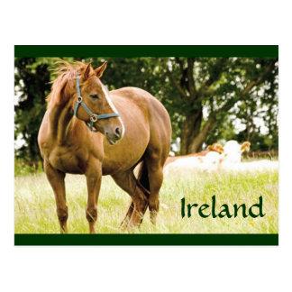 Cartão de Ireland (cavalo no campo)