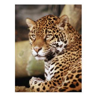 Cartão de Jaguar Cartão Postal