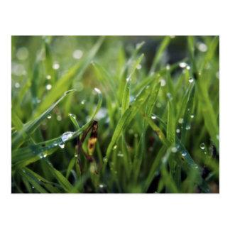 Cartão de jardinagem da grama da gota de orvalho