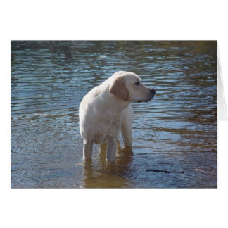 Cartão de labrador retriever no lago