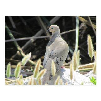 Cartão de lamentação da pomba