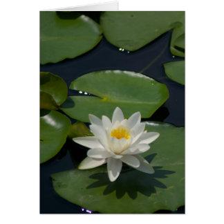 Cartão de Lotus branco Waterlily